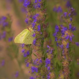 Rose-Marie Karlsen - Beauty with wings