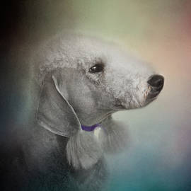 Jai Johnson - Bedlington Terrier
