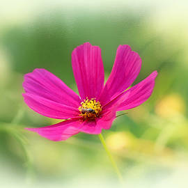 Mother Nature - Bee and Cosmos