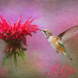 Angie Vogel - Bee Balm and Hummingbird