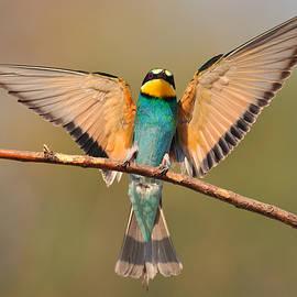 Veselin Gramatikov - Bee eater