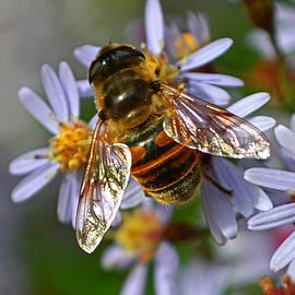 George Bostian - Bee Harvests Pollen 003