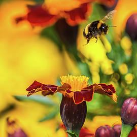 Bee Hop