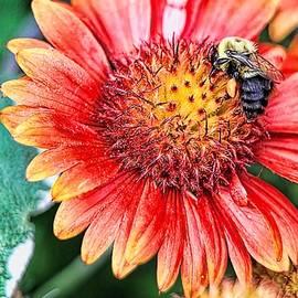 Geraldine Scull   - Bee On Flower