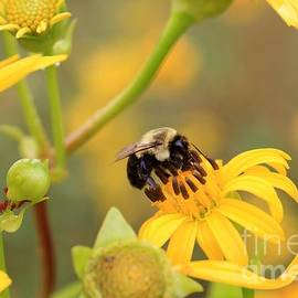 Rick Rauzi - Bee on Wildflower