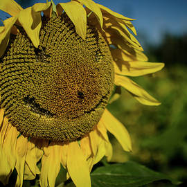Miguel Winterpacht - Bee Smiling Sunflowers