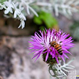 Casavecchia Photo Art - Bee-utiful