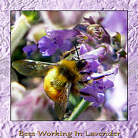 Michele  Avanti - Bees Working Lavender Collection