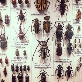 Beetles - David Ridley