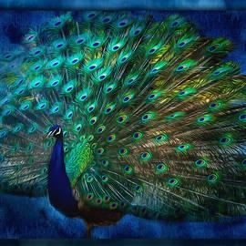 Jordan Blackstone - Being Yourself - Peacock Art