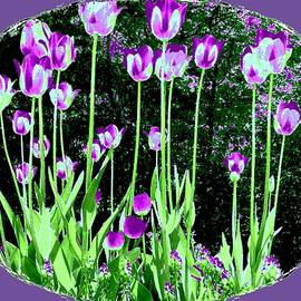 Will Borden - Belles Tulipes Au Printemps
