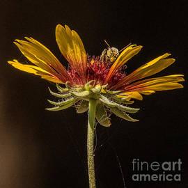 Janis Knight - Below the Bee