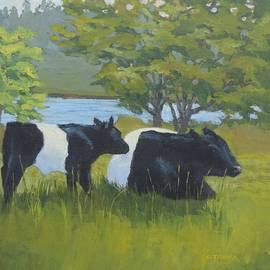 Bill Tomsa - Belted Galloway and Calf