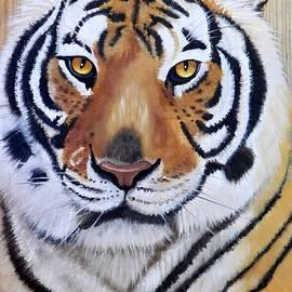 Debbie LaFrance - Bengal Tiger on Wood