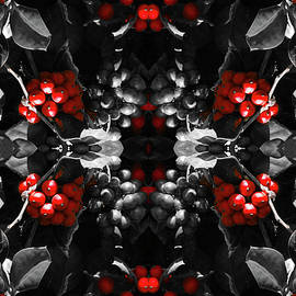 Douglas Barnard - Berry Kaleidoscope