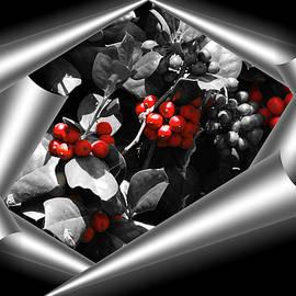 Douglas Barnard - Berry Wrap