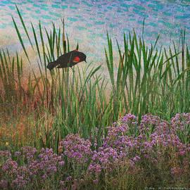 R christopher Vest - Beside The Pond Redwing Blackbird