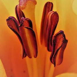 Honey Behrens - Between the Petals