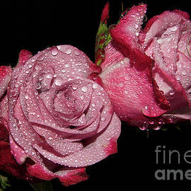 Elvira Ladocki - Beutiful Roses