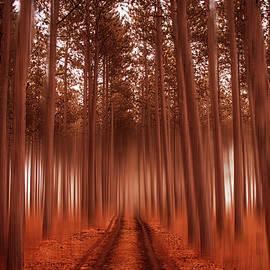 Angela King-Jones - Beyond the Forest