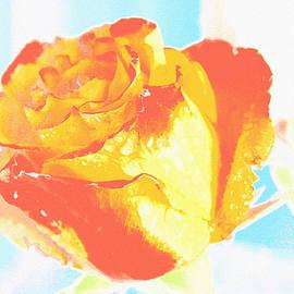 Lali Kacharava - Bicolor rose
