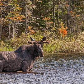 Steve Dunsford - Big Bull