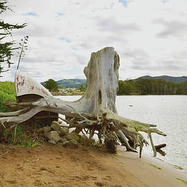 Barbara Snyder - Big Stump Los Osos California