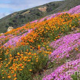Kris Hiemstra - Big Sur Spring