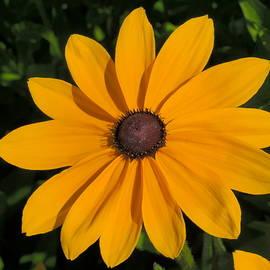 Jeff  Swan - Big yellow blossom