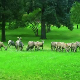 Chris Flees - Bighorn Sheep Ewes