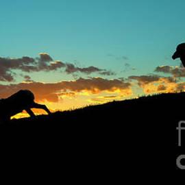 Mike Dawson - Bighorn Sunset
