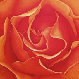 Dee Dee  Whittle - Biltmore Rose