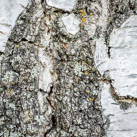 Mary Chris Hines - Birch Bark Pictorial I