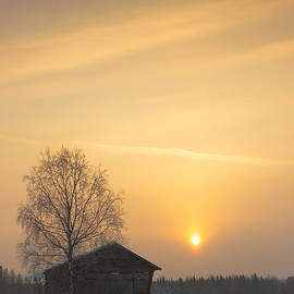 Jukka Heinovirta - Birch Tree And A Barn In The Sunrise