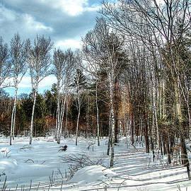 Betsy Zimmerli - Birch Wood