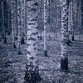 Jouko Lehto - Birches
