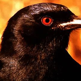Colette V Hera  Guggenheim  - Bird Friend