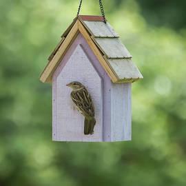 Brian Manfra - Bird House