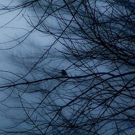 Donna Fonseca Newton - Bird in Blue