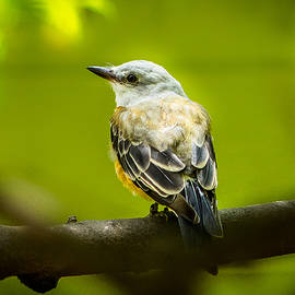 Liang Li - Bird