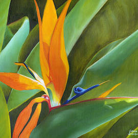 Adam Johnson - Bird of Paradise