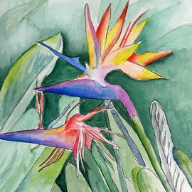 Brenda Owen - Bird Of Paradise