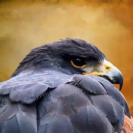 Carol Lux Photography - Bird of Prey