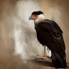 Cyndy Doty - Bird of Prey