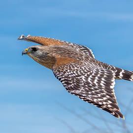 Phil Stone - Bird or plane