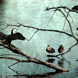 Roseanne Jones - Bird Perch