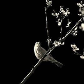 Bird Silhouette - Martin Newman
