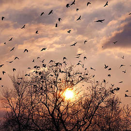 Nikita Roytman - Birds At Sunset
