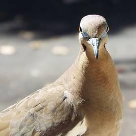 Michael Dillon - A Bird views i