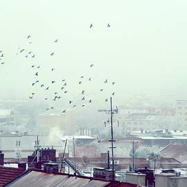 Jenny Rainbow - Birds Falling Down the Rooftops